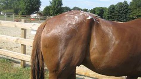 How to get rid of Rain Rot in Horses? – Equine Health Care