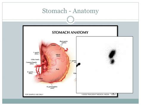 PPT - Gastric Emptying Study PowerPoint Presentation, free