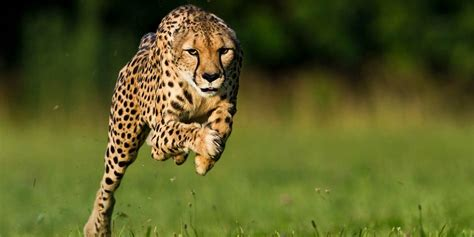 The fastest animals Top 10