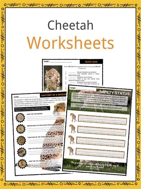 Cheetah Facts, Worksheets, Habitat, Appearance & Diet For Kids