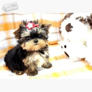 Buy and Sell for FREE online - iBuyWeSell   Cute Purebred
