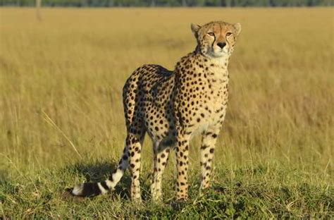 Fastest Animals on Earth That Move at Unimaginable Speeds