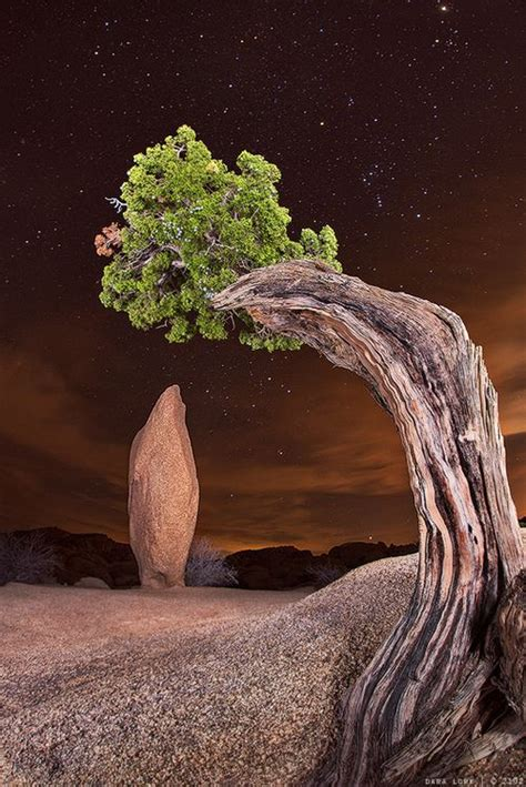 Joshua Tree National Park in California, USA – The WoW Style