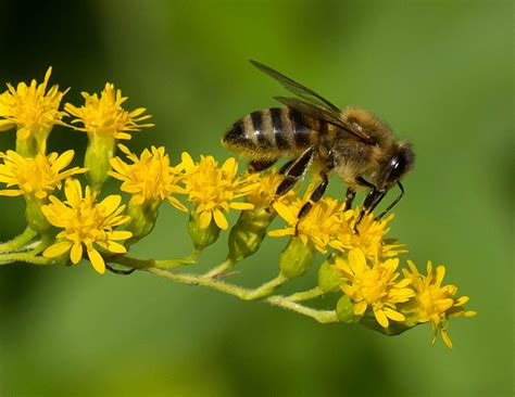How Rising CO2 Levels May Contribute to Die-Off of Bees